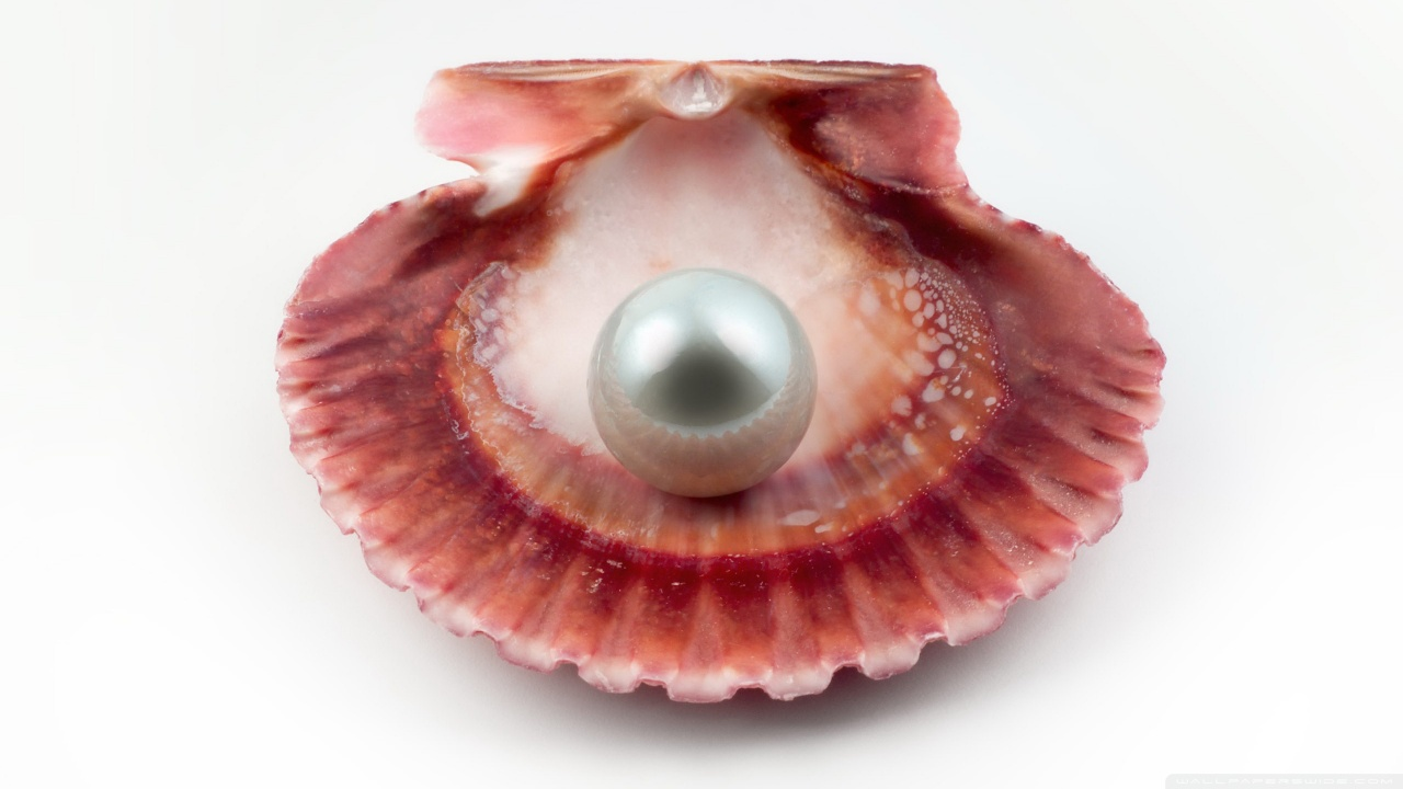 Natural Pearl oyster